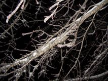 Iced Tree Branches at Night. Iced-over tree branches at Night. Results of winter ice storm Royalty Free Stock Images