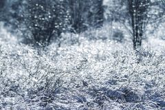 Iced Tree and Grass Stock Images
