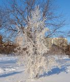 Iced Tree Stock Images