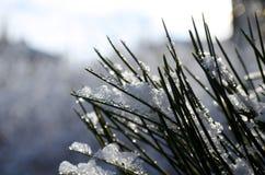 Iced tree Stock Photography