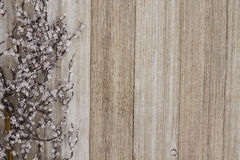Iced winter branch weathered wood. With copy space for your message Royalty Free Stock Photography