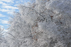 Iced Winter Forest Royalty Free Stock Photos