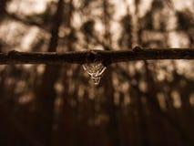 Icedrop w zimie Zdjęcie Stock