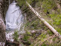 Icefall with fallen tree. Icefall with fallen green tree stock photo