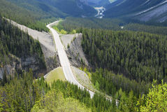 Icefield parkway in forests stock photography