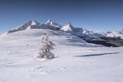 Icefields gångallé i kanadensiskt stenigt Royaltyfria Foton