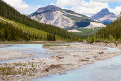 Icefields Parkway- Banff National Park-Alberta- Canada Stock Photography