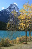 Icefields Parkway Mountains and Aspens Royalty Free Stock Photos