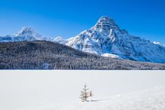Icefield Parway is a highway that goes from Lake Louise to Jasper National Park and offer scenic view of the Canadian Rockies royalty free stock photo