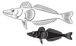 Icefish Royalty Free Stock Photography