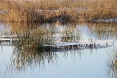 Icefloes Invierno Agua Naturaleza Fotografía de archivo