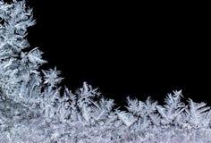 iceflower Στοκ φωτογραφίες με δικαίωμα ελεύθερης χρήσης
