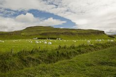 Iceladnd landscape. With wrapped bales Stock Photography