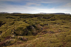 Iceland. Ic landscape with rocks and moss royalty free stock image