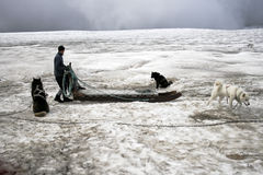 Dogsledding on a glacier in Iceland Royalty Free Stock Photo