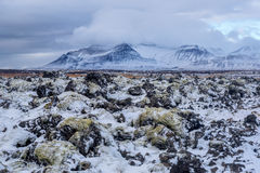 Iceland, Beautiful arctic landscape, wild field Stock Photography