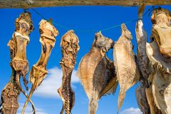 Iceland, drying fish Royalty Free Stock Photos