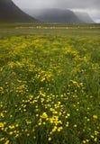 Iceland. Dynjandivogur Bay. Royalty Free Stock Image