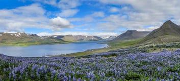 Iceland_Fjord_stream2 Стоковое фото RF