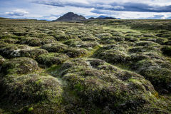 Iceland_Fjord_stream2. Icelandic lava field with moss Royalty Free Stock Images