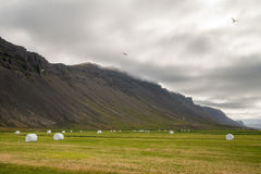 Iceland green landscape with hay stacks Stock Images