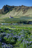 Iceland. Ic summer landscape country side view Vik town Stock Images