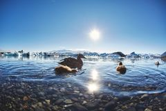 Beautiful cold landscape picture of icelandic glacier lagoon bay, Stock Images