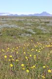 Iceland lato Obrazy Stock
