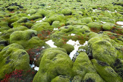 Iceland Lava Field Royalty Free Stock Photos