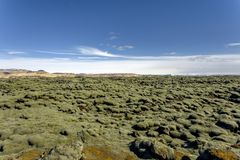 Iceland lava field covered with green moss Stock Photo