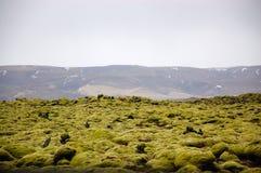 Iceland Lava field, green moss, volcanic rocks Royalty Free Stock Photography