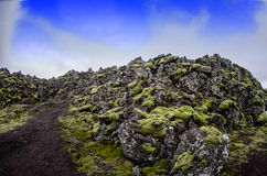 Iceland Lava field. Path though moss covered lava field in southern Iceland Royalty Free Stock Photo