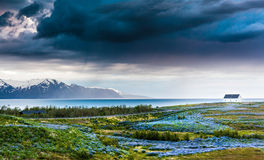 Iceland: lupins meadow over atlantic coastline. Stock Photo