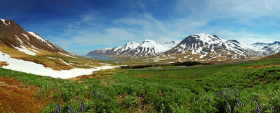 Iceland mountain panorama with flowers royalty free stock photography