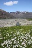 iceland nationalparkskaftafell royaltyfri fotografi