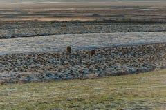 Iceland Nature and Wild Horses royalty free stock photo