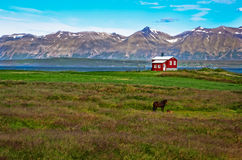 Iceland red house in the meadow Stock Images