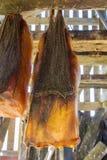 Iceland's fermented shark. At Bjarnarhofn Shark Museum (drying house, Iceland Royalty Free Stock Photos