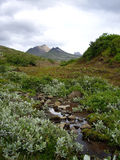 Iceland's vegetation. In Skaftafell National Park Stock Photo