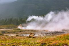 Smidur Geyser at Iceland Geysers Valley Stock Image