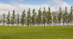 Iceland. South area. Green field and trees. Royalty Free Stock Photography
