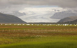 Iceland. Southeast area. Flaajokul glacier and field. Royalty Free Stock Image