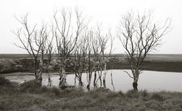Iceland. Southeast area. Hvoll. Trees and lake. Royalty Free Stock Images