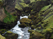Iceland spring in a mosses rock Stock Images