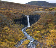 Iceland - Svartifoss Waterfall Royalty Free Stock Image
