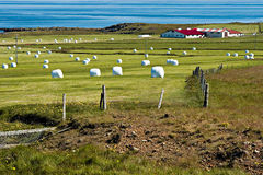 Iceland, west fjords, green landscape and typical bales of hay Stock Photography