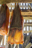 Iceland's fermented shark Royalty Free Stock Photos