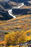 Icelandc jesieni krzak Obrazy Royalty Free