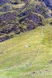 icelandic får på bergfält i Island royaltyfria foton