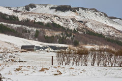 Icelandic Farm Stock Photos